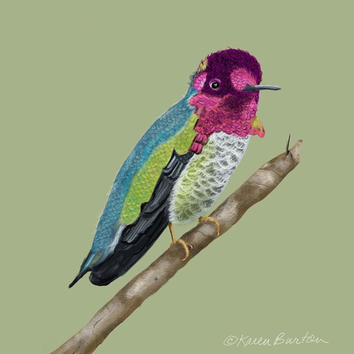 Karen Burton | Anna's Hummingbird