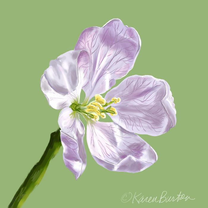 Karen Burton | Apple Blossom