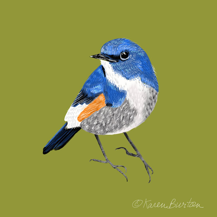 Karen Burton | Bluebird