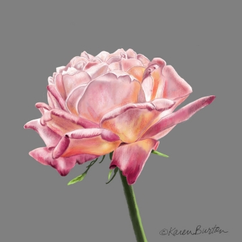 Karen Burton | Blushing Rose