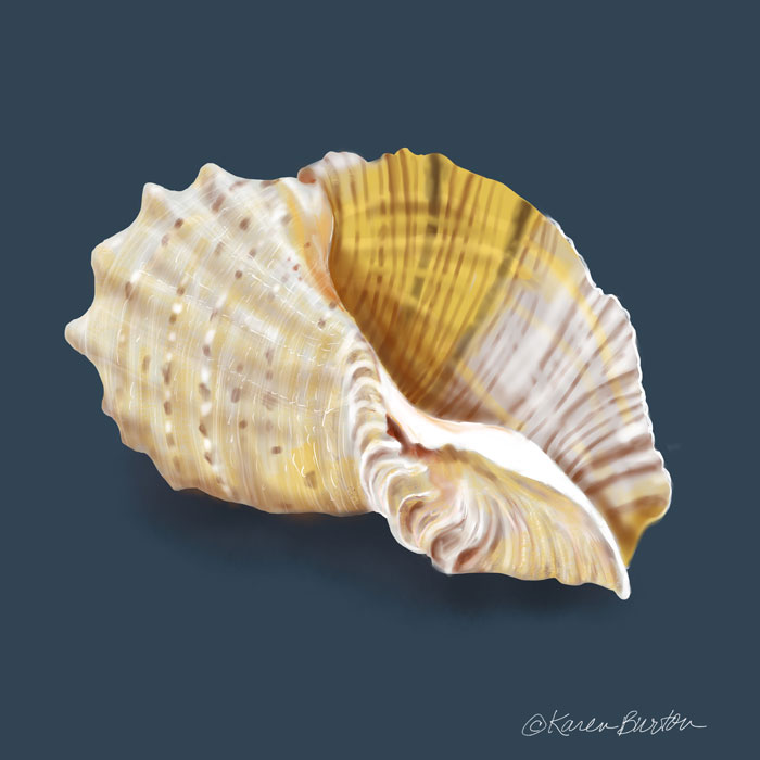 Karen Burton | Fancy Conch Shell
