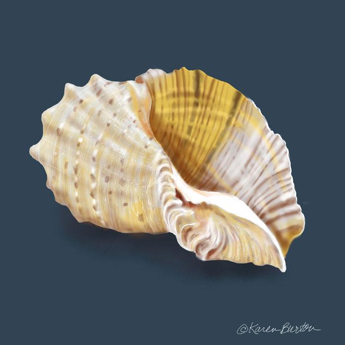 Karen Burton | Fancy Conch Shell