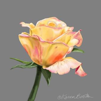 Karen Burton | Hombre Rose