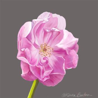 Karen Burton | Lady's Blush Rose