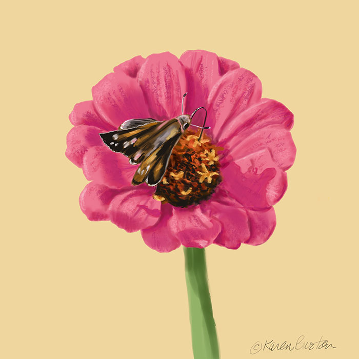 Karen Burton | Moth_on_Zinnia