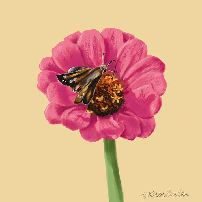 Karen Burton | Moth_on_Zinnia
