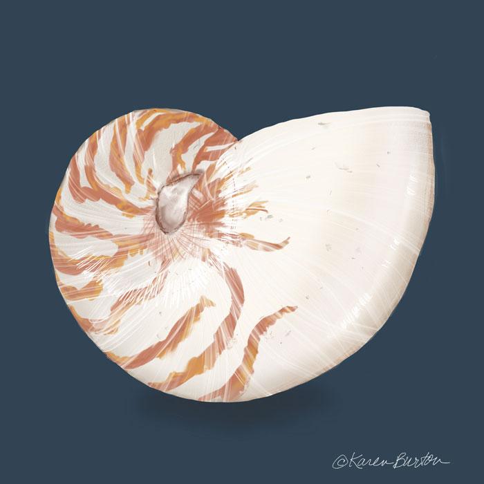 Karen Burton | Nautilus Shell