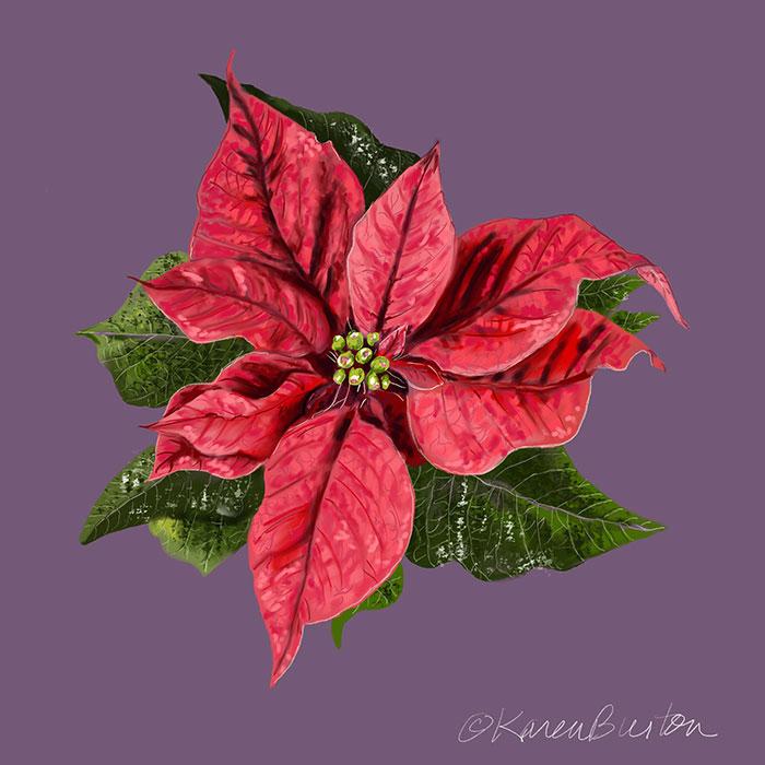 Karen Burton | Poinsettia