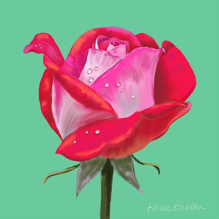 Karen Burton | Misty Rose