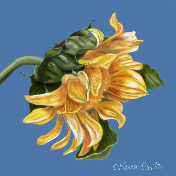Karen  Burton | Sunflower